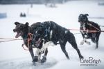 chiens-en-action-22