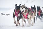 chiens-en-action-23