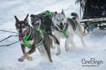 chiens-en-action-5