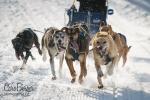 chiens-en-action-7
