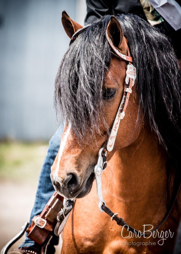 Les cowboys extr mes au salon du cheval caro berger - Salon du cheval tarif ...