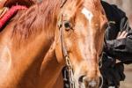 cowboy-extremes-3